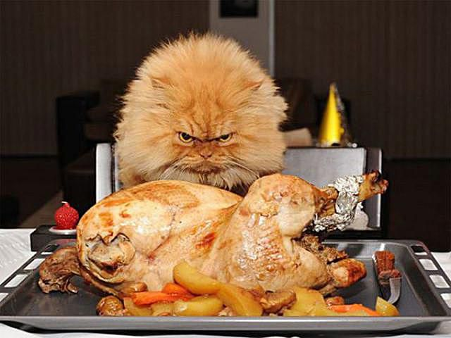 Thanksgiving Cat Meme