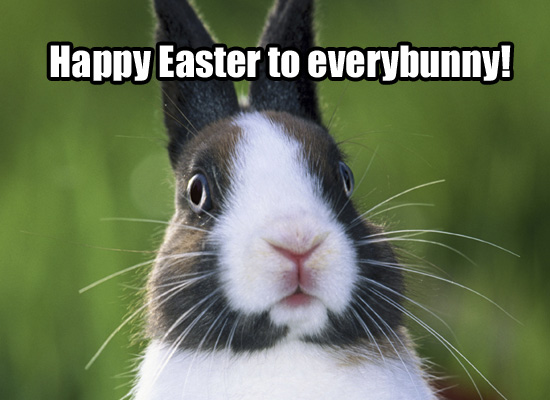funny easter bunny quotes