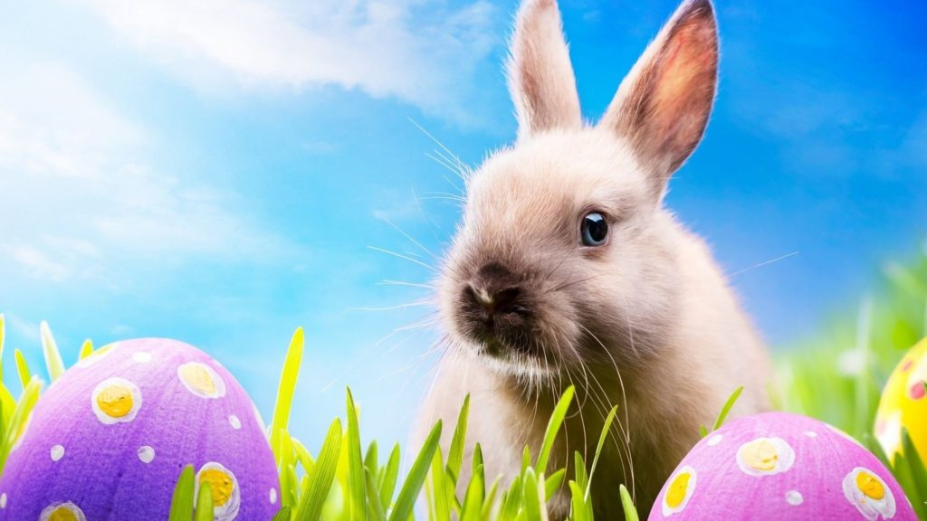 Happy Easter Bunny Images 2019