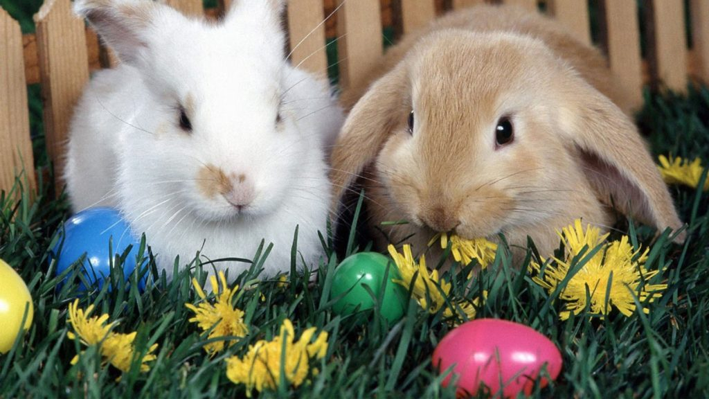 Easter Bunny Images 2019