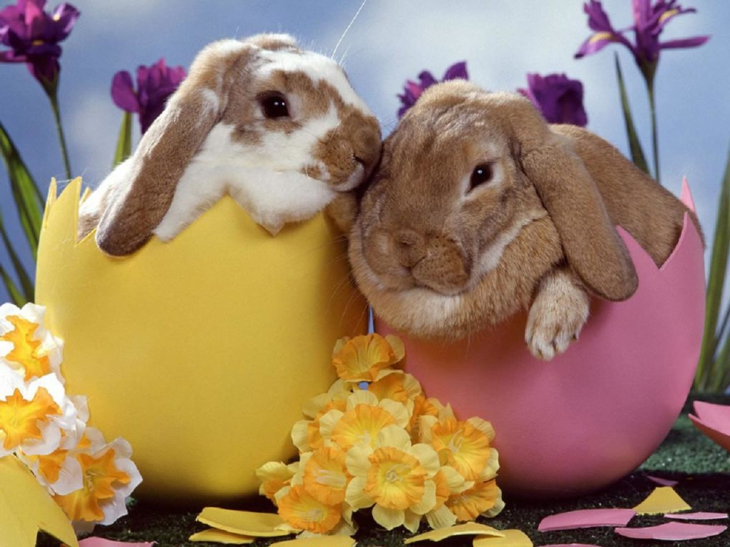 Happy Easter Day Bunny Pics